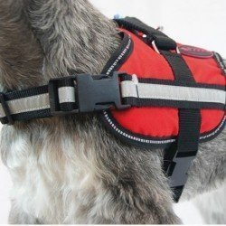 Royal Canin Diet Feline Gastro Int Mod Cal 4kg