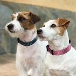 Royal Canin Diet Gatos Urinary S/O Pollo 12x100g Sobres