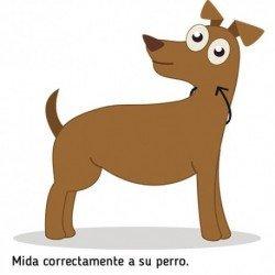 Correa nylon roja - 120 cm