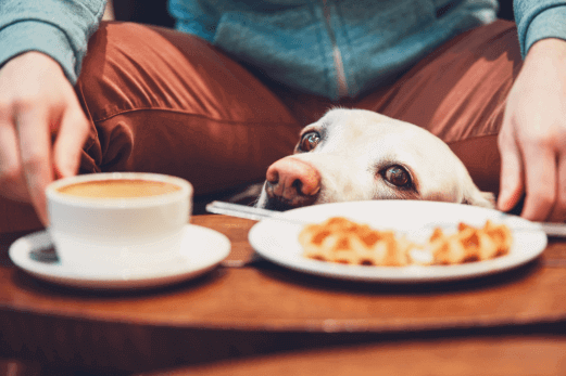 alimentacion-azucar-perro