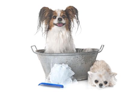 perritos baño