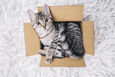gato-caja