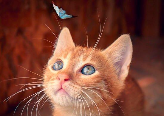 gato-cazando-mariposa