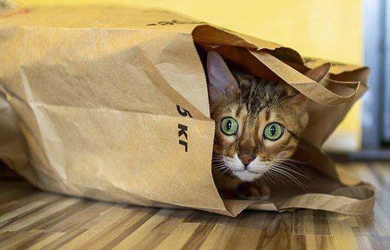 gato-curioso-bolsa