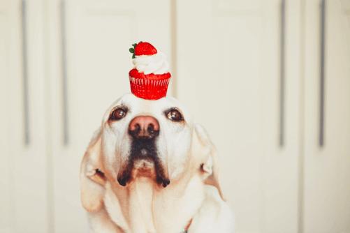 perro-con-dulce-alimentacion-azucar